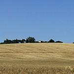 L'estate, il grano, i girasoli