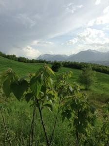 Gli alberi piantati da Nataan per ricavare la cellulosa