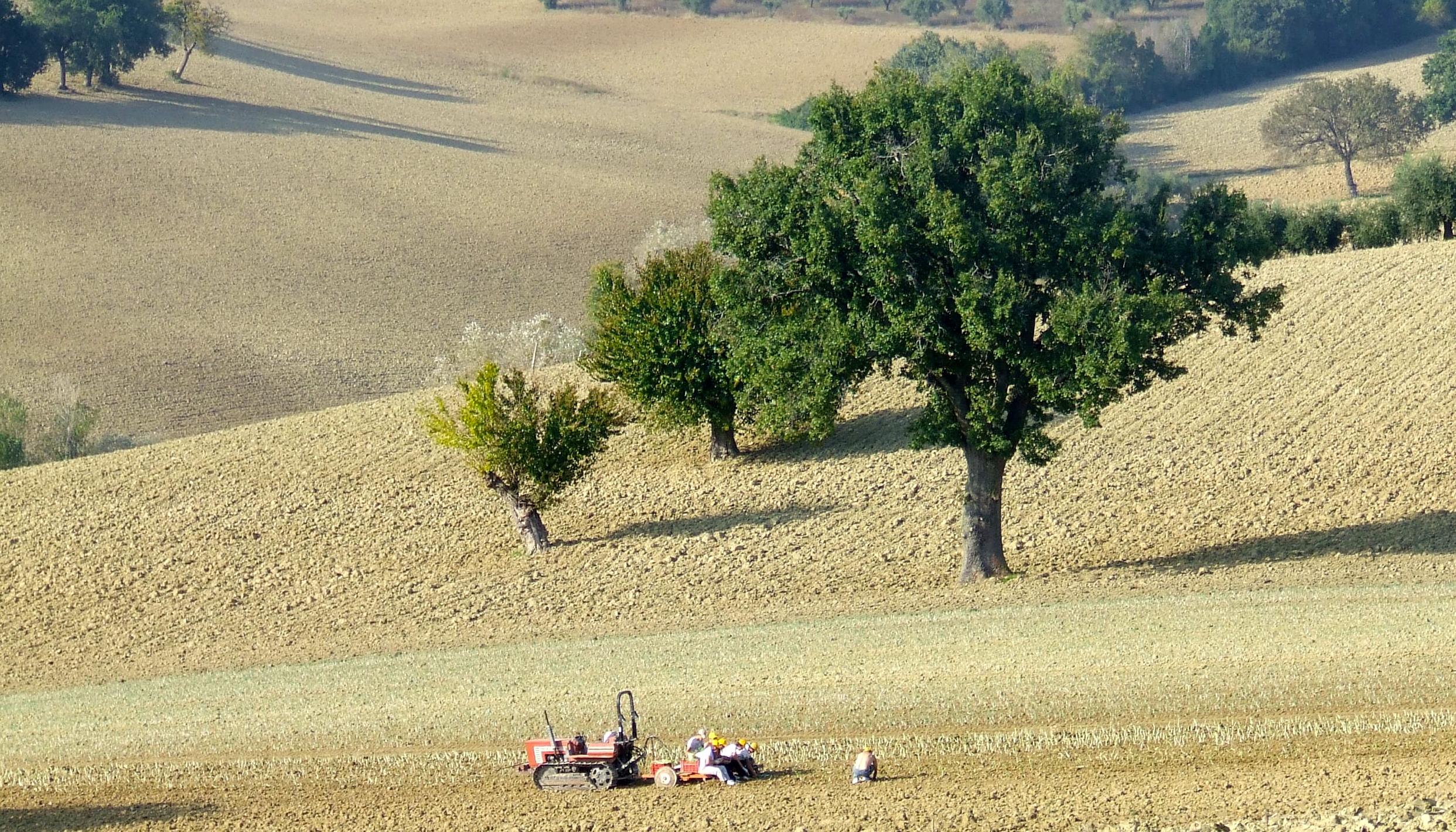 La campagna di filottrano in autunno i viaggi di for Disegni di cabina di campagna