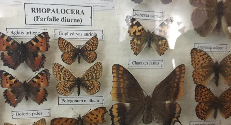 giardino-farfalle-cessapalombo