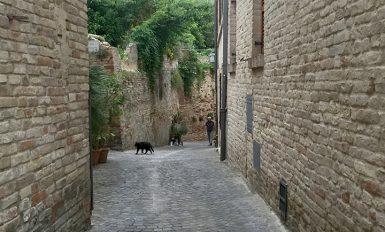 civitanova-alta-gattino