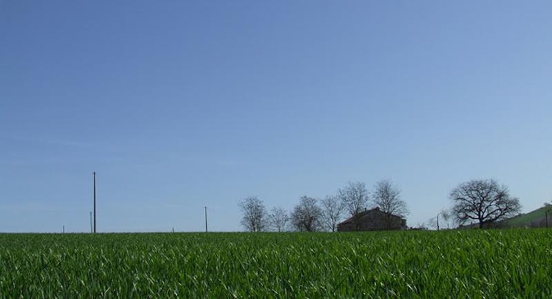 grano-primavera-marche