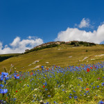 La fioritura di Castelluccio 2014