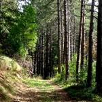 Il Sentiero dei Mietitori