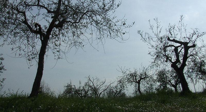 alberi 4