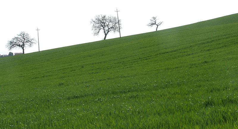 alberi9