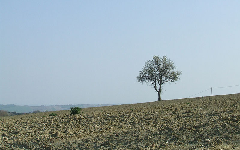 albero-marche-1