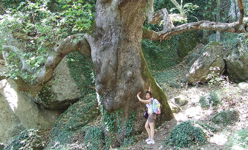 meteore-albero