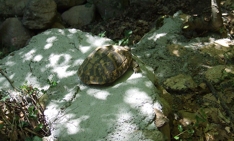 meteore-tartaruga