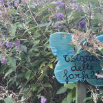 Cessapalombo – Dove volano le farfalle