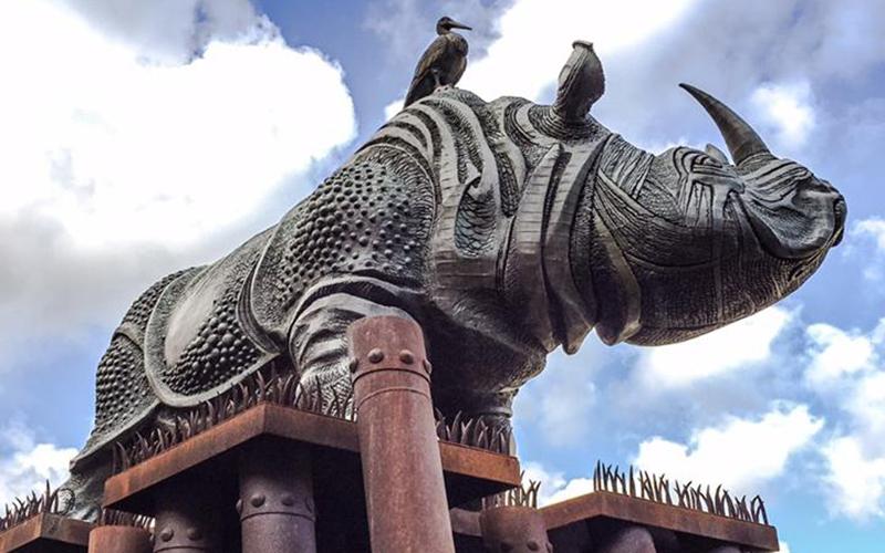 rinoceronti_ancona