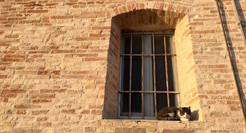 moresco-gatto