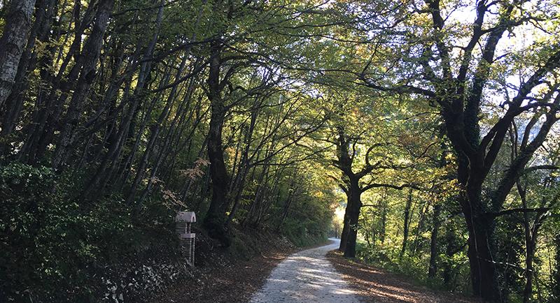 santuario-madonna-grotta-bosco