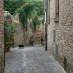 Tra i vicoli di Civitanova Alta