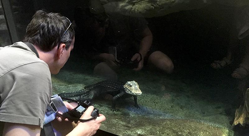 caimano-acquario-genova