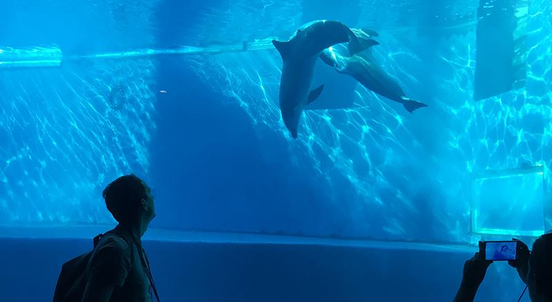 casca-delfini-acquario-genova