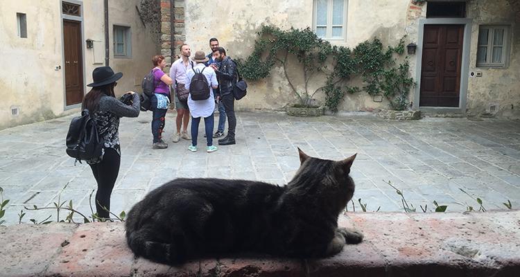 il-borro-gattino