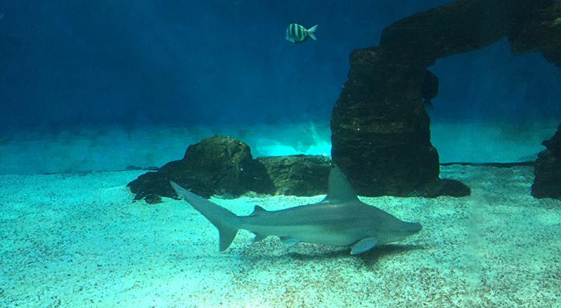 squali-genova