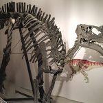 Il dinosauro di Serrapetrona